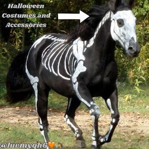 Halloween Costumes & Accessories Divider